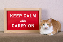 Red Cat With Blurred The Poster In The Frame With A Message Keep Calm And Carry On