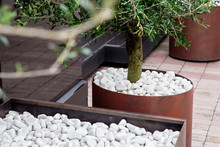 Iron Flowerpots On A Street Near The Dark Glass Facade Of A Building For Decorative Trees Withgreen Leaf With Stone White Pebbles, Closeup Nobody.