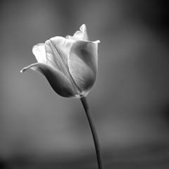 Close up greyscale shot of a beautiful flower with a blurry background under the sunlight
