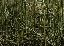 Closeup Of Tangled Long Plant ...