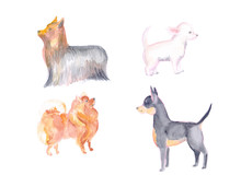 Set Of Small Dogs, Spitz, Toy ...