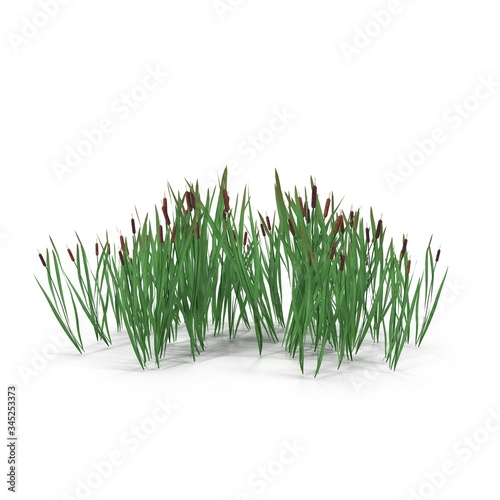 Obraz na plátne Photorealistic highly detailed 3D visualization of the Bulrush