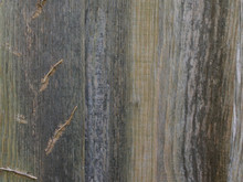 Old Worn Wooden Fence Panel Wi...