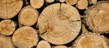 Felling From A Tree, Sawn Trees. Theme Of Mass Deforestation