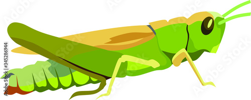 Fotografía green grasshopper on a white background