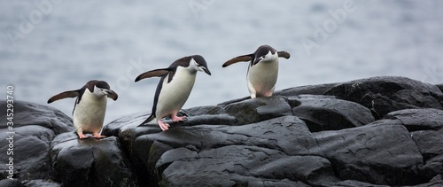 Panoramic view of three penguins on the stones in Antarctica Canvas Print