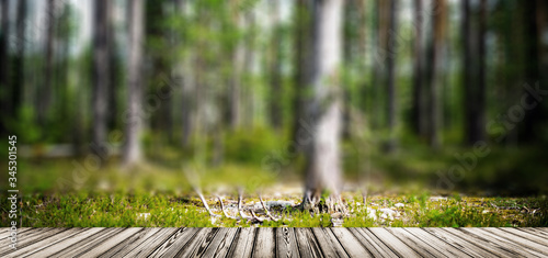 Wild forest panorama - 345301545