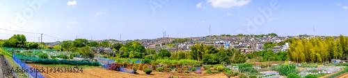 Fototapeta 【神奈川県 横浜市】花桃の丘 obraz na płótnie