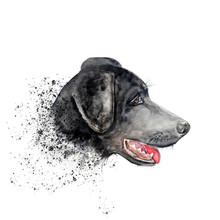 Aquarelle Painting Of Dog Sket...