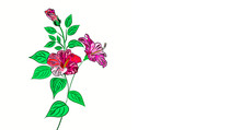 Hand Drawn,beautiful Flowers A...