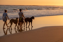Couple Taking Their Great Dane For A Walk On Beach