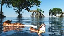 Snake In Red Mangroves On Flor...