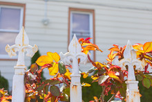 Closeup Of Three White Fleur De Lis Points With Plants On A Home Fence