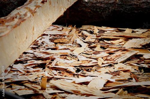 woodchips Canvas-taulu