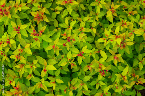 Green and red flower pattern.