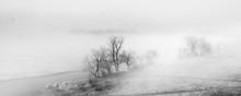 Trees In Morning Fog. Minimali...