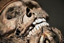 Skull Part Of A Mummified Body