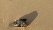 Muszla rzucająca cień i leżąca na morskim piasku