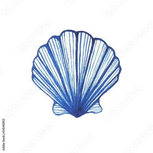 Fotografie, Tablou Illustrations of underwater life objects - blue sea shell, marine design
