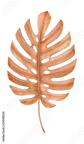 Plakat w ramce 40x30 cm Watercolor golden dried fan palm leaf. Monstera leaf. Exotic beige clipart isolated on the white background. Hand-drawn illustration. California boho style.