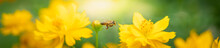 Beautiful Nature View Of Flower And Bee On Blurred Greenery Background In Garden With Copy Space Using As Background Natural Flower Landscape, Ecology, Fresh Cover Page Concept.