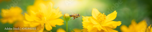 Photo Beautiful nature view of flower and bee on blurred greenery background in garden with copy space using as background natural flower landscape, ecology, fresh cover page concept