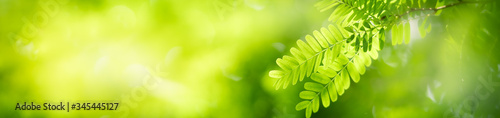 Beautiful nature view of green leaf on blurred greenery background in garden with copy space using as summer background natural green leaves plants landscape, ecology, fresh cover page concept. #345445127