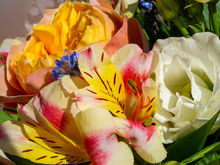 Close-up To An Amazing Fresh White Rose And A Striped Lily. Spring Or Summer Time. Vibrant Color