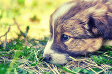 Puppy Relaxing On A Warm Summer Day
