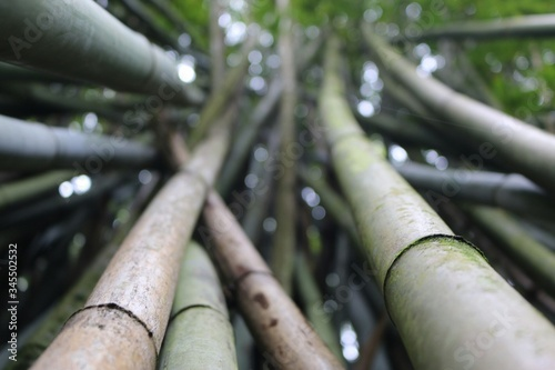 Tableau sur Toile Close-up Of Bamboos