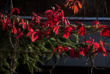 Low Angle View Of Red Flowers ...