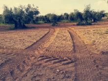 Atardecer En Campo De Cultivo