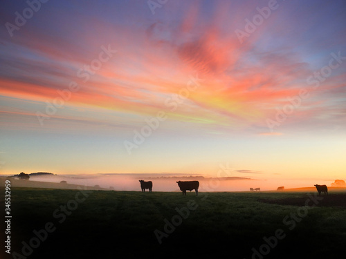 Платно Silhouette Horses On Tree Against Sky During Sunset