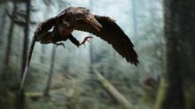 Archaeopteryx, Bird-like Dinos...