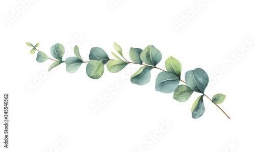 Photo Watercolor vector vector hand painted green eucalyptus branch.