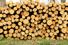 A Stack Of Cut Timber In A Forest