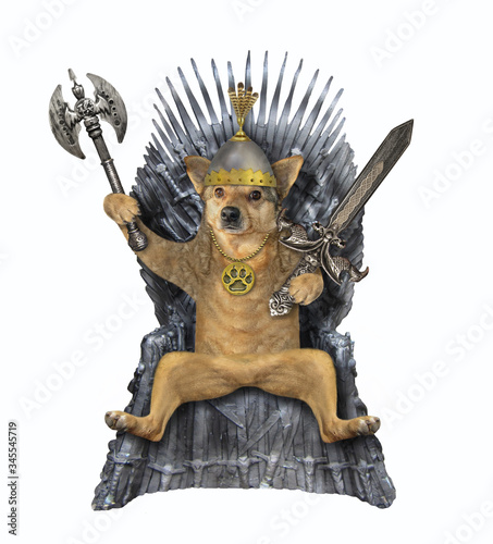 Fototapeta The beige dog king in a helmet with an inlaid sword and an ax is sitting on an iron throne