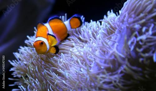 Billede på lærred Close-up Of Fish Underwater