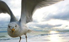 Close-up Of Seagull At Shore Against Cloudy Sky