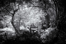 Infrared Woodland In Black And...