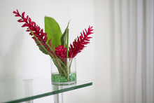 Crimson Flower In Glass On Shelf