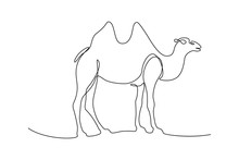 Two-humped Bactrian Camel In Continuous Line Art Drawing Style. Minimalist Black Linear Sketch Isolated On White Background. Vector Illustration