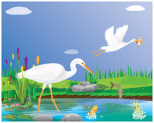 White Heron Feed On Fish In The Swamp Vector Design