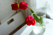 Bouquet Of Red Tulips In A Gla...