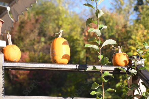 Orange pumpkins at outdoor farmer market. pumpkins in line on an wooden board