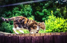 Side View Of Cat On Wooden Fence Against Plants