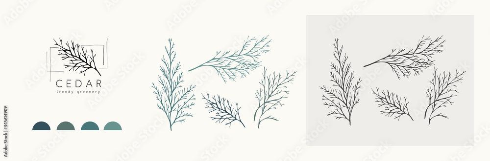 Fototapeta Cedar logo and branch. Hand drawn wedding herb, plant and monogram with elegant leaves for invitation save the date card design. Botanical rustic trendy greenery