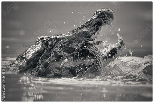 Crocodile Hunting Fish In Lake Fototapete