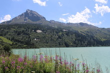 Mountain Lake And Flowers