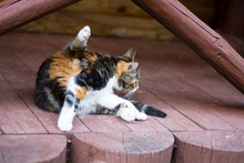 A Cat Lying On Top Of A Wooden...